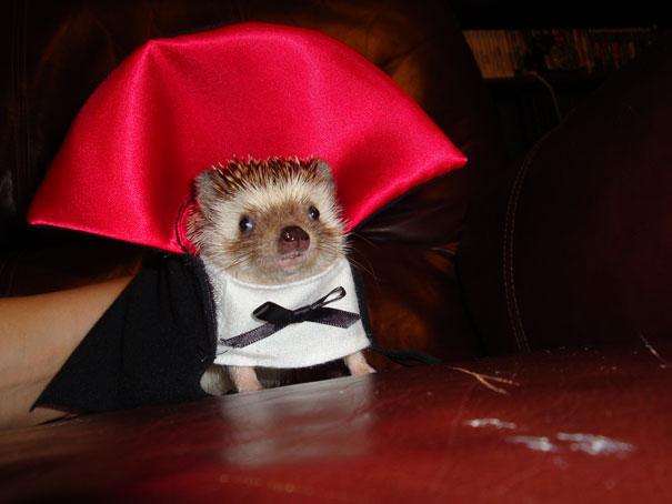 Halloween Hedgehog