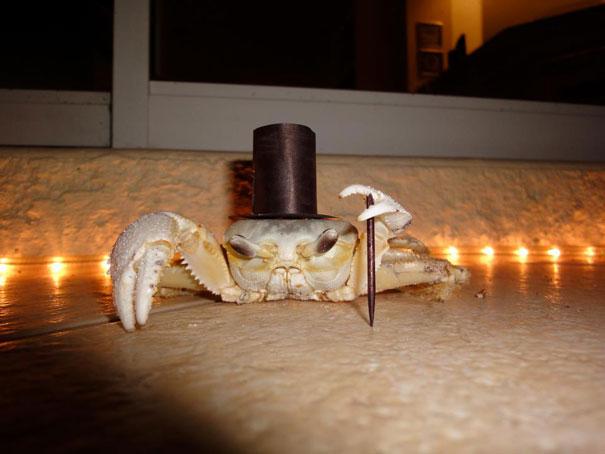 Halloween Crab