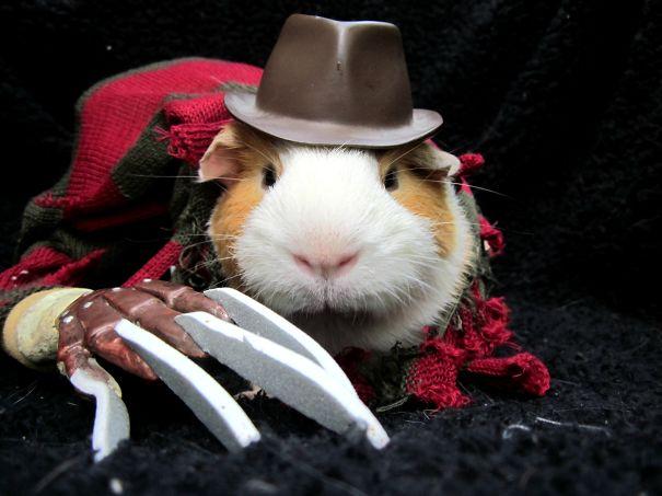 Halloween Guinea Pig 2