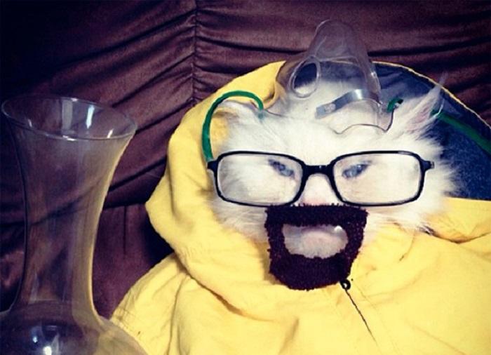 Halloween Breaking Bad Cat