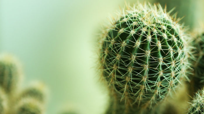 Why the Cactus is so in Right Now