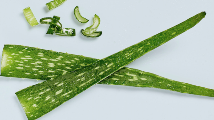 Thick, Green and Goopy: How Aloe Vera Can Do Wonders for Your Skin and Hair