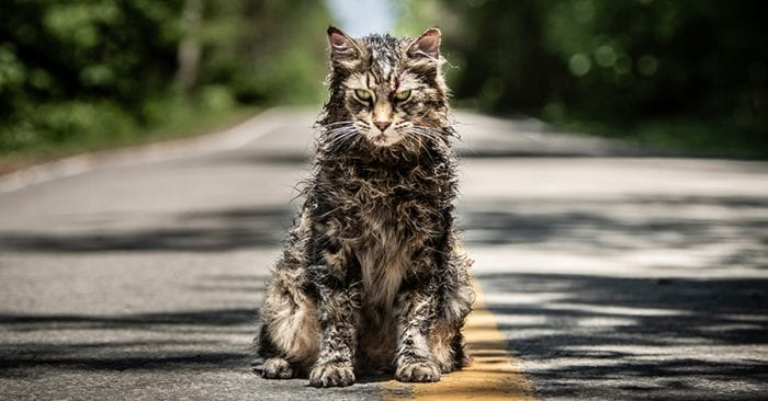 Pet Sematary Star Leo The Cat Has Died