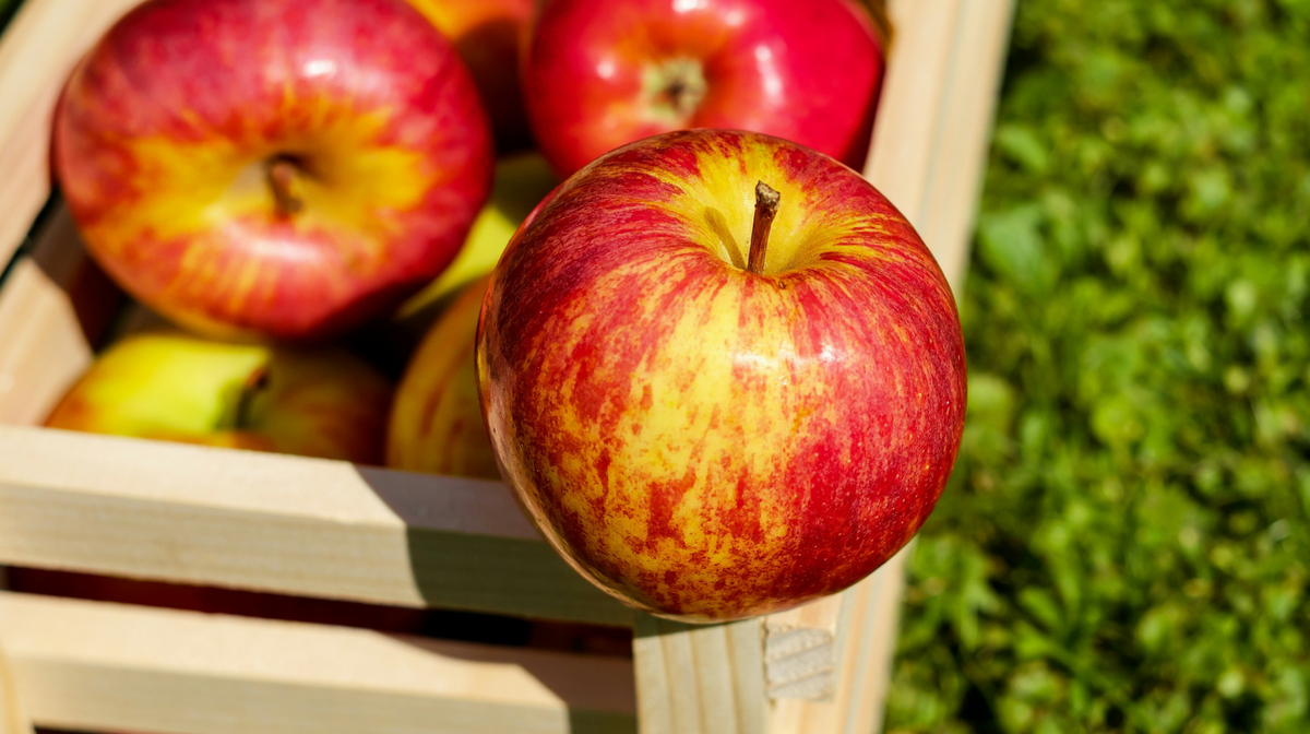 la mela: potente alleata per rimanere in forma