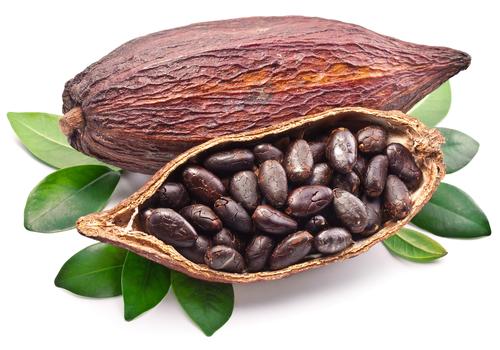 cacao para preparar barritas proteicas de cacao
