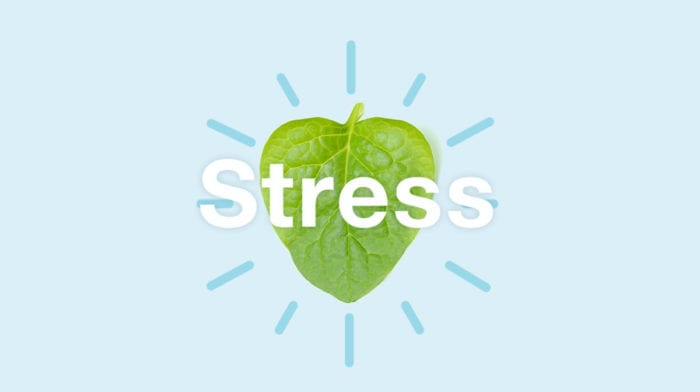 Anti-stress mad | Spis dig fri for stress