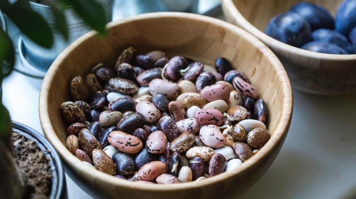 Folkekære Vegan Guide | Grønne proteiner til en vegansk livsstil RG-23
