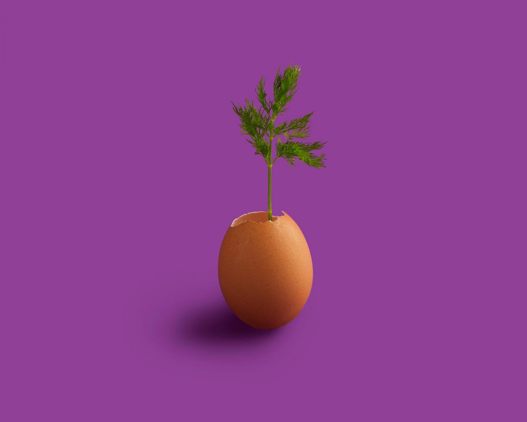 Hele æg