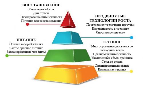 Пирамида в бодибилдинге