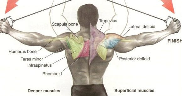 rear deltoid exercise