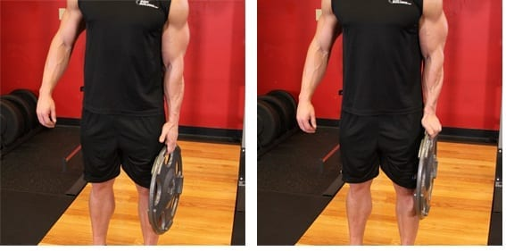 Standing Olympic Plate Stand squeeze