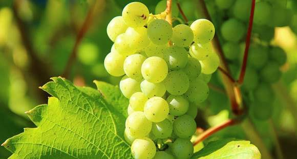Grape Seed Extract | Benefits & Usage