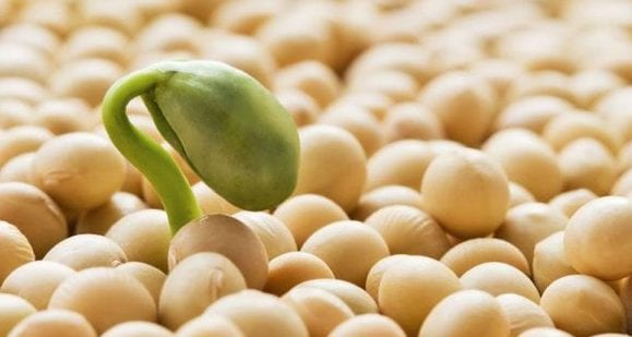 Is Soy Actually Healthy?