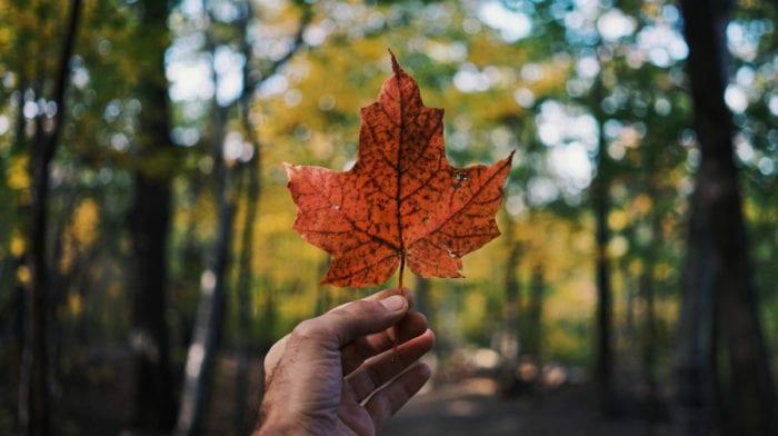 3 Maple Recipes To Celebrate Canada Day