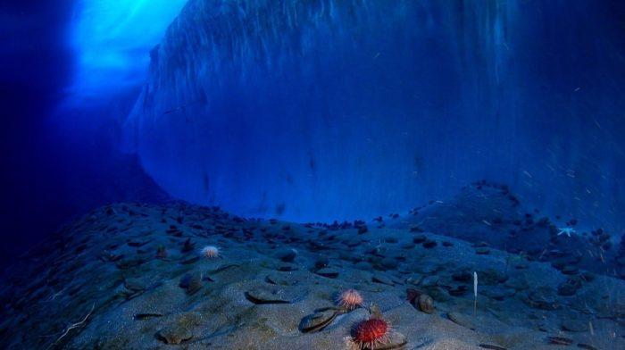クリルオイル | 南極オキアミはオメガ3の最高の源?