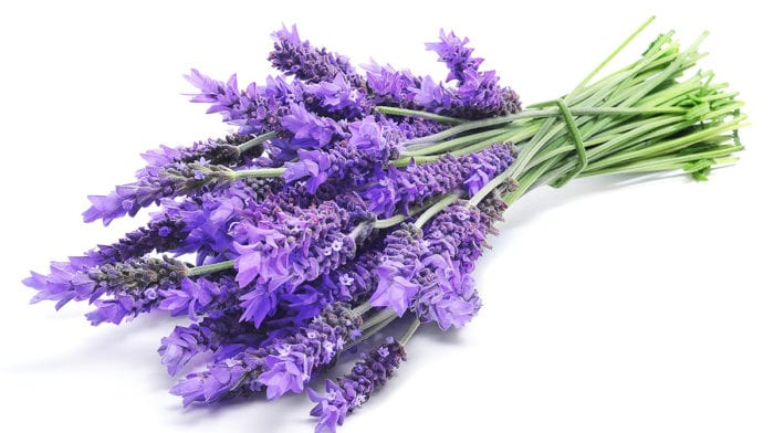 Sweet Dreams: Using Lavender for Sleep