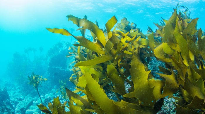 Seaweed Benefits Your Hair Can Soak Up