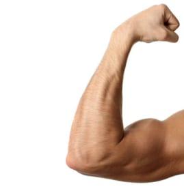 Bicep-biceps-1