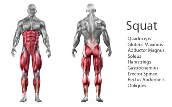 quadriceps squat