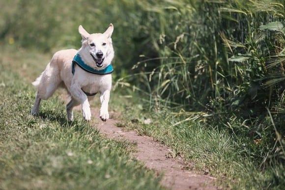 courir-avec-son-chien