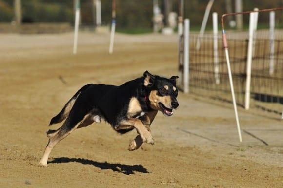 jogging-avec-son-chien