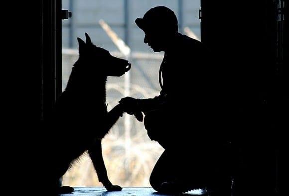 ordre-et-chien