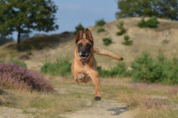 chien-et-sport-ensemble