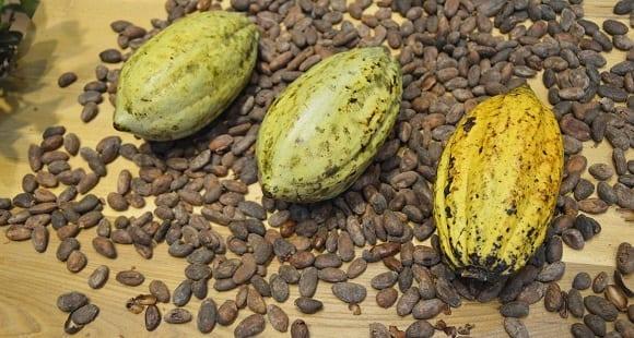 cacao-et-chocolat-noir