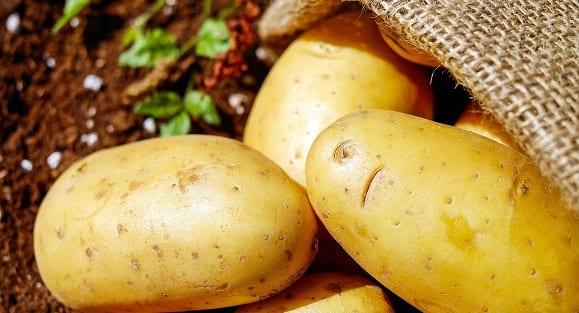 Patate douce VS Pomme de terre