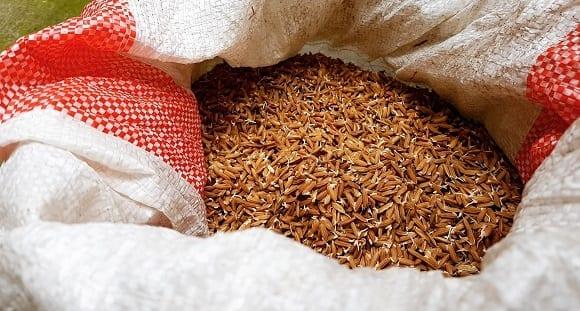 variété de riz, le riz brun