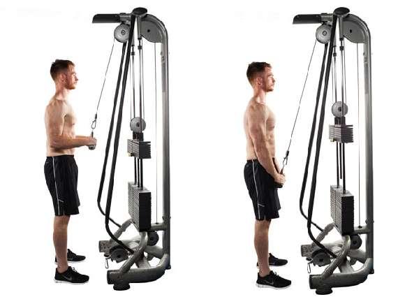 Übung #4: Triceps Pushdowns am Kabelzugturm