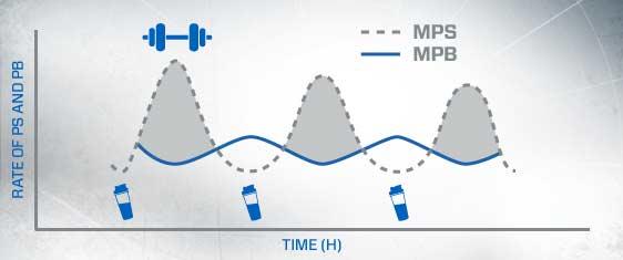 Wie Protein funktioniert