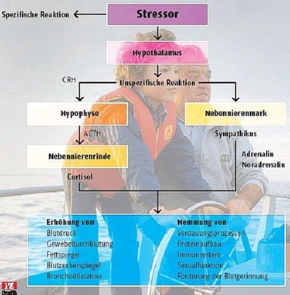 Muskelabbau bei Infekten