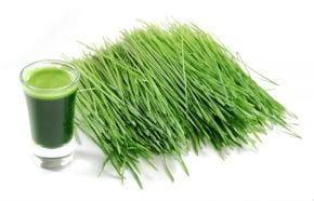 Grünes Superfood #4: Weizengras