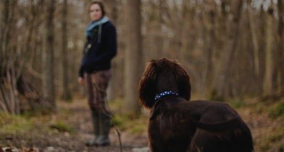 Mit dem Hund Gassi gehen: Die Vorteile von Sommerabenden
