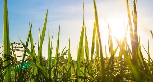 Quinoa und Co. unbekannte Getreidevielfalt