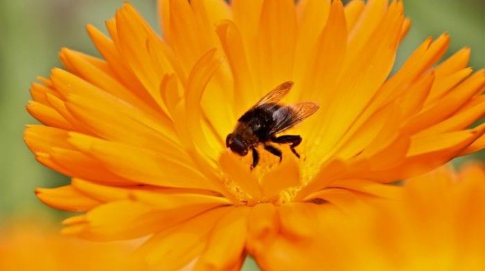Bienenpollen | Was du über sie wissen musst