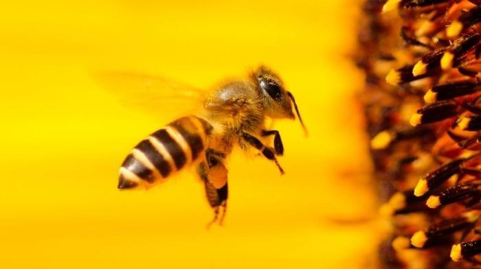 Fettarm Backen | Gesundes Bienenstich Rezept