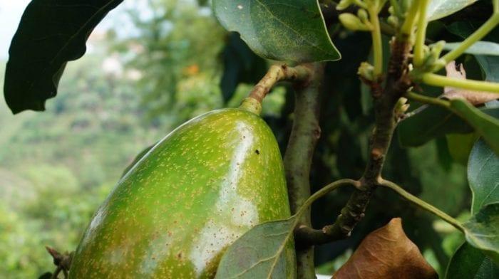 Leckeres Guacamole Rezept | Gesunde Snacks