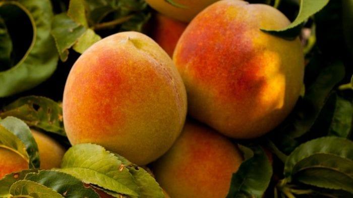 Pfirsich Matcha Lassi | Veganes Rezept