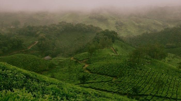 Was ist Moringa Tee | 3 erstaunliche Vorteile für deine Gesundheit
