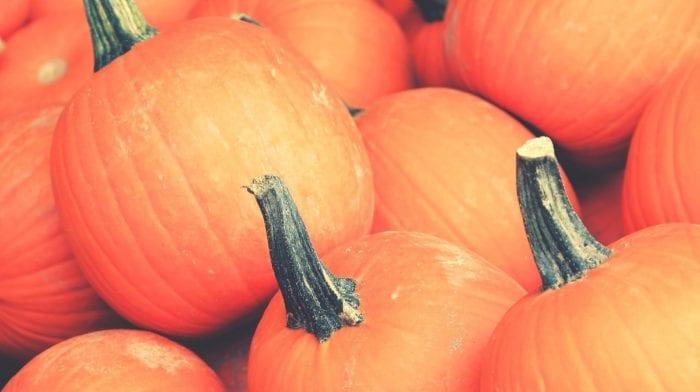 Kürbis | Nicht nur für Halloween