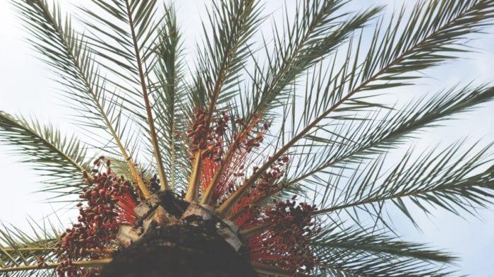 Erdnussbutter trifft Kokosnuss | Vegane Proteinballs