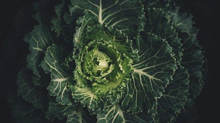 Kale Chips | wieso sie so gut für dich sind