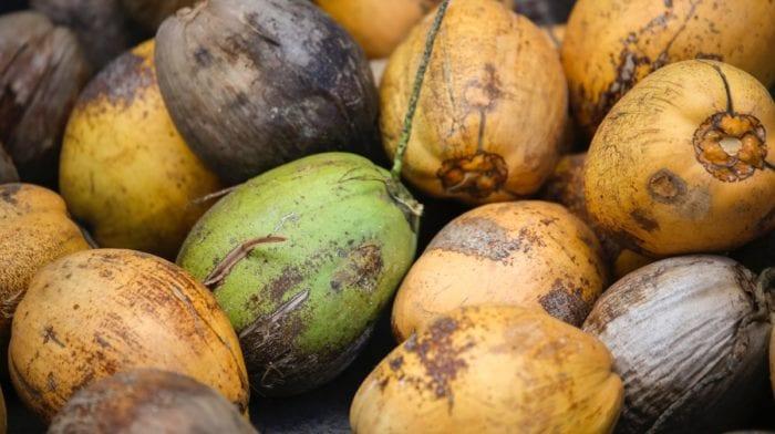 Kokoswasser: Was ist dran am Hype? | Ernährung & Gesundheit