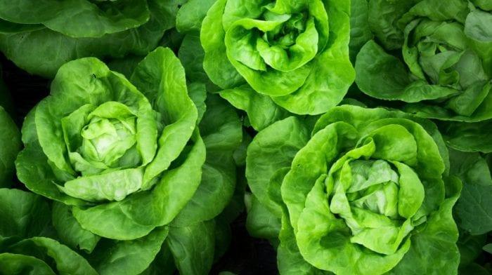 Vitamin K | Mangel, Vorteile, Geeignete Lebensmittel?