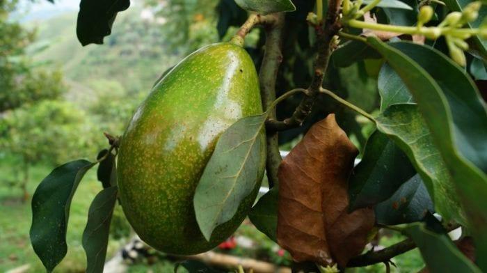 Glutenfreie Hähnchen Avocado Spieße | Gesunde Ernährung Rezepte