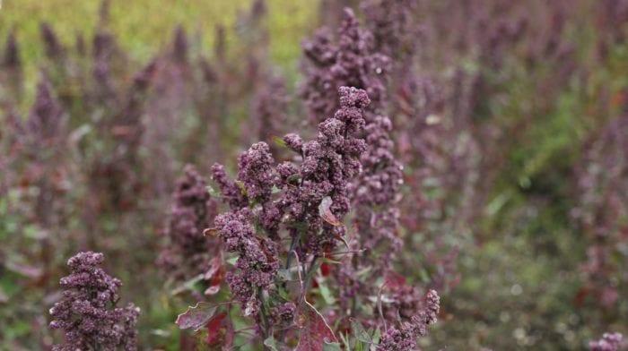 Quinoa Bratlinge mit Omega-Samen Mix