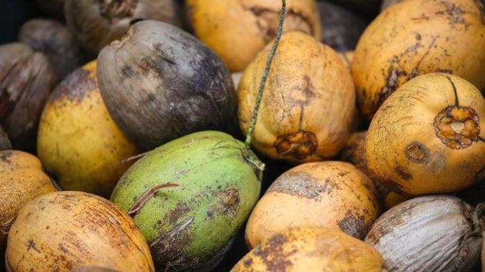 Erfrischendes Kokos-Honig Stieleis | Fettarmes Eis