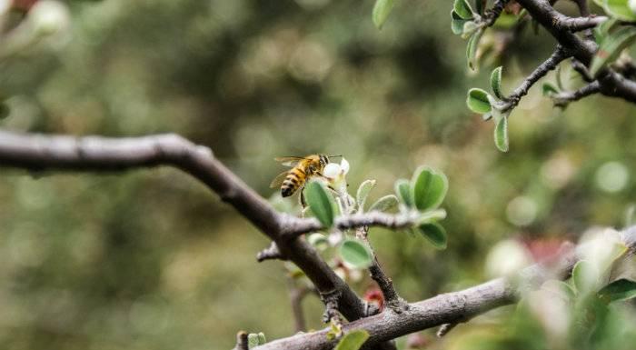 Dürfen Veganer Honig essen? | Probiere es mit diesem Honig-Ersatz